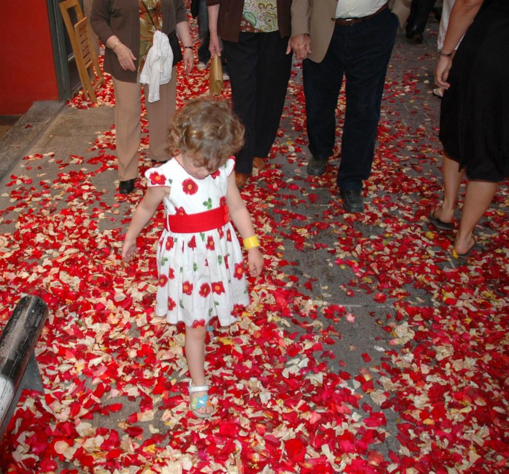 rosepetals1000